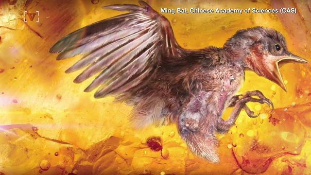 A tiny 99-million-year-old bird found trapped in amber is a big deal