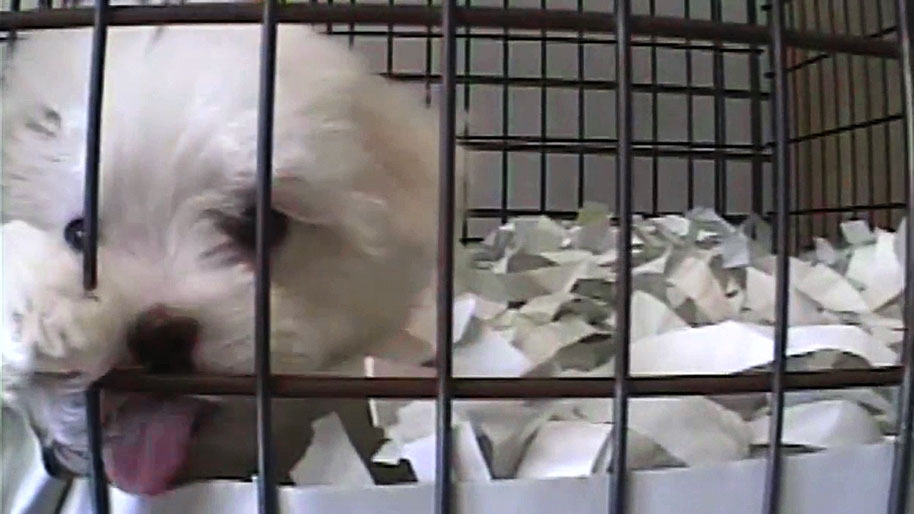 'Horrible Hundred': These 10 Iowa puppy mills were among the worst in the nation, according to the Humane Society of the U.S.