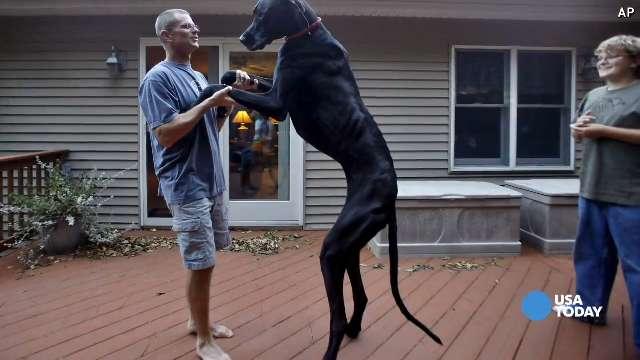 Zeus, world's tallest dog, dies at age 5