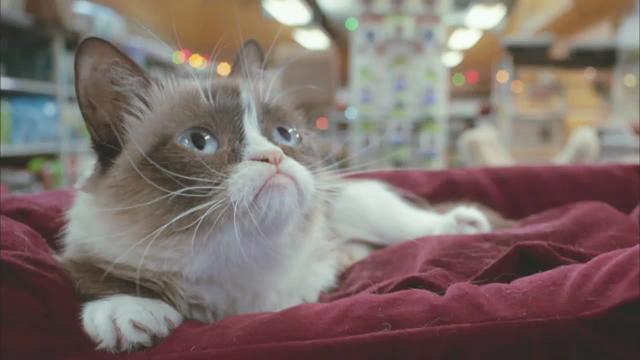 Grumpy cats christmas movie doesnt suck altavistaventures Choice Image