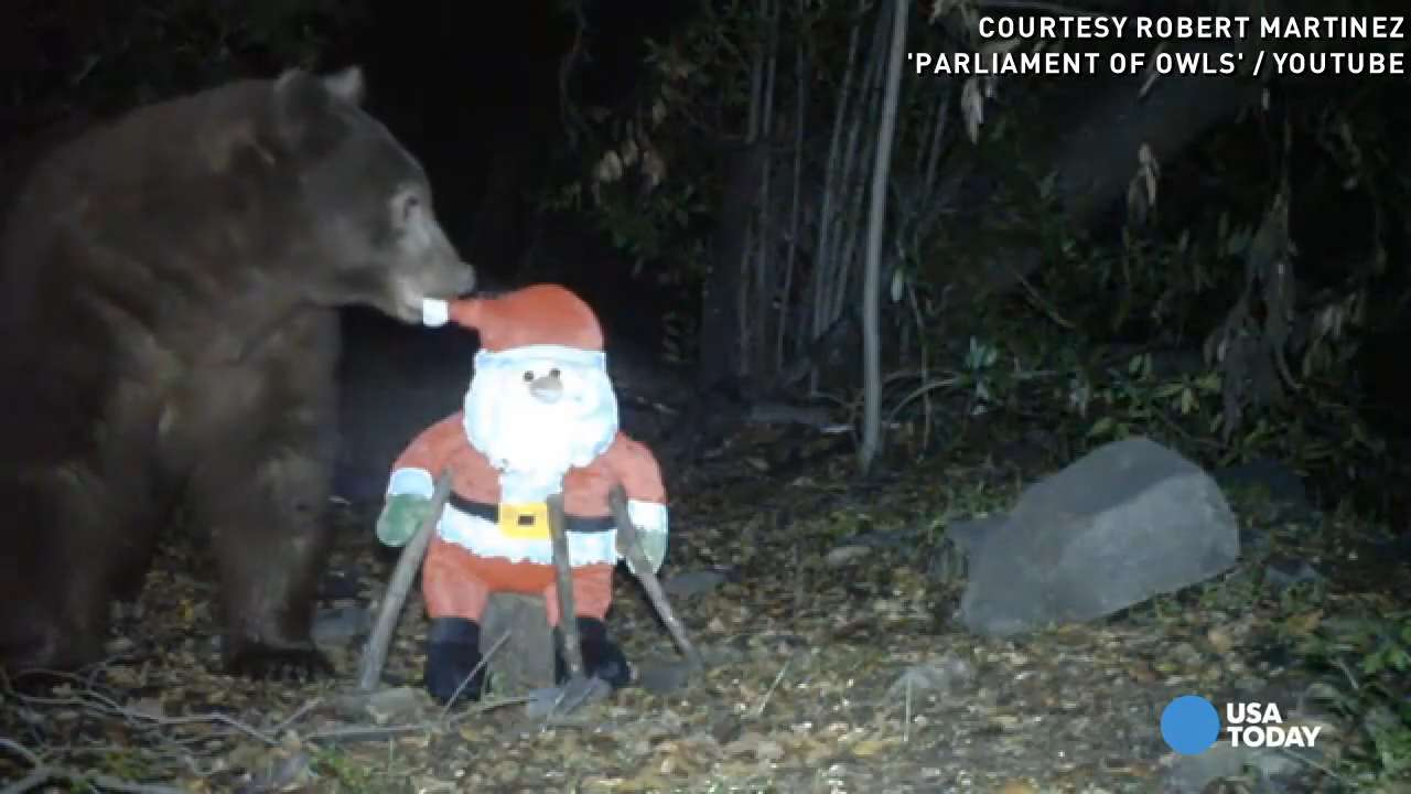 Watch Santa get knocked out by a curious bear