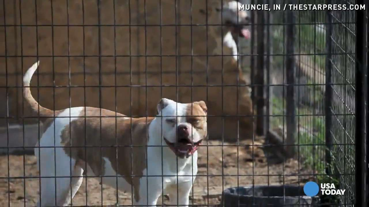 Dozens Of Dogs Seized Puppies Found In Freezer