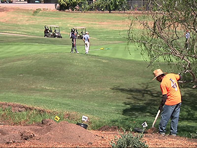 Golf courses rip up grass during drought