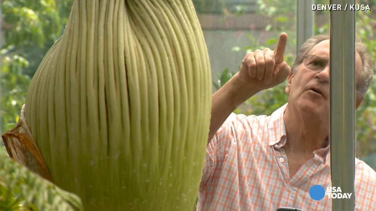 Corpse flower helps business bloom in Denver