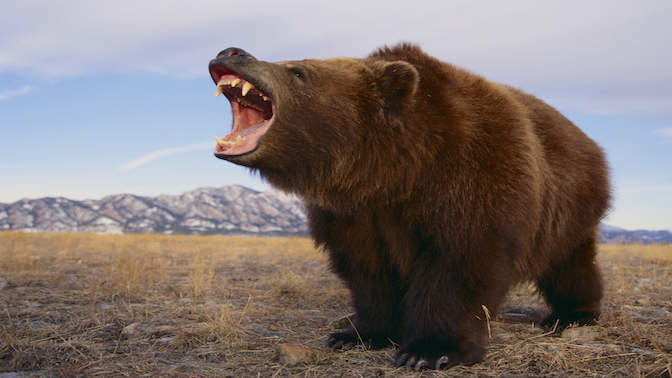 Bear Market is a term that sends fear into Wall Street and investors.  What does it mean? And how does it affect both Wall Street and Main Street?  Adam Shell explains.