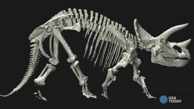 A new study has the potential to drastically transform the dinosaur family tree.