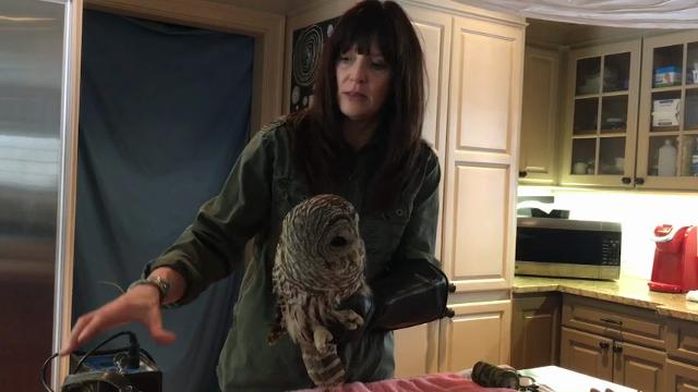 An owl is lucky to be alive after flying into truck and getting stuck between the cab and the cargo hold. (March 30)