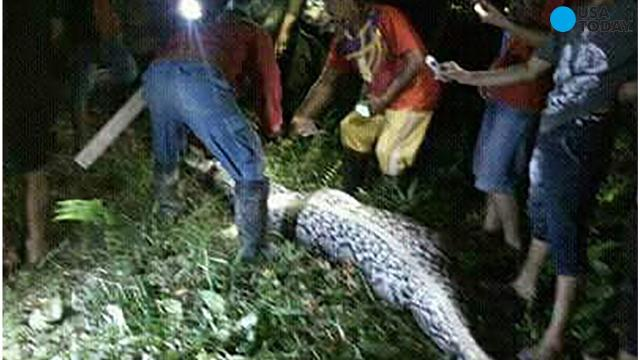 Graphic photos show the discovery of a missing farmer INSIDE a giant python in Indonesia.