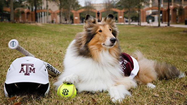 Adorable dog mascots in honor of National Puppy Day