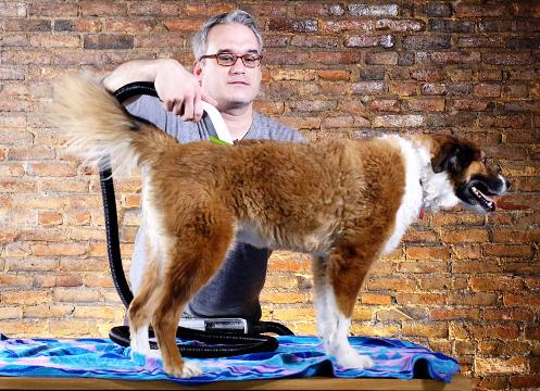We tried the Bissell BarkBath, a portable dog-washing machine