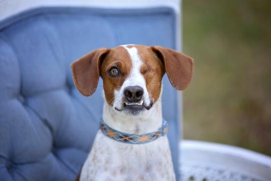 After he was abused as a puppy, which caused him to lose an eye, a woman adopted this Jack Russell Terrier mix to give him a better life.