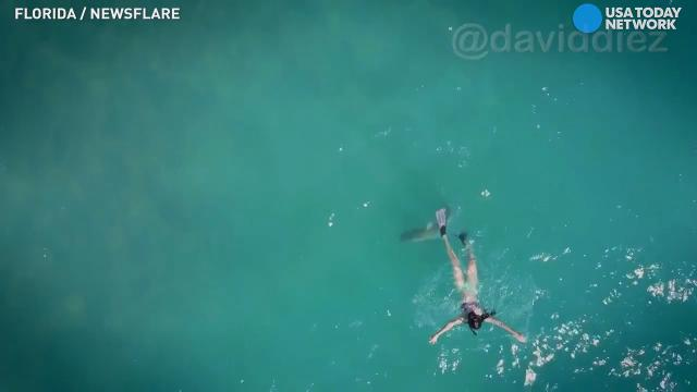 Drone footage captures a shark sniffing out a potential bikini-clad meal off the coast of Florida.