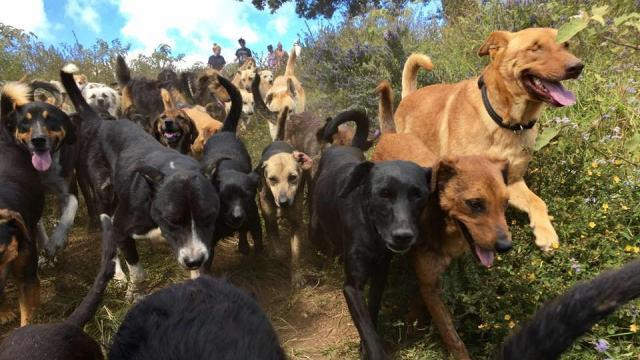 Territorio de Zaguates or 'Land of Strays' is a no-kill shelter. Video provided by Newsy