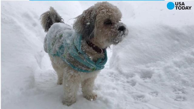 Adorable! Dog enjoys shoveled raceway in the snow