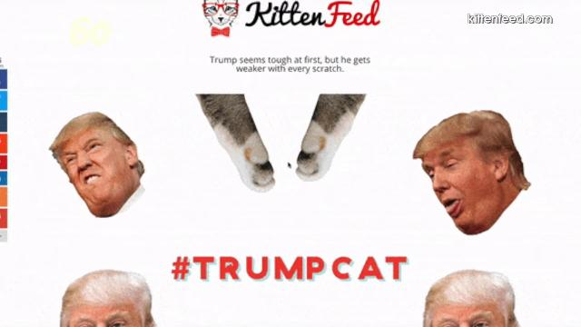 President Trump sent a 'cease and desist' letter to a teen whose website involves his face and kittens. Nathan Rousseau Smith (@fantasticmrnate) shows us.