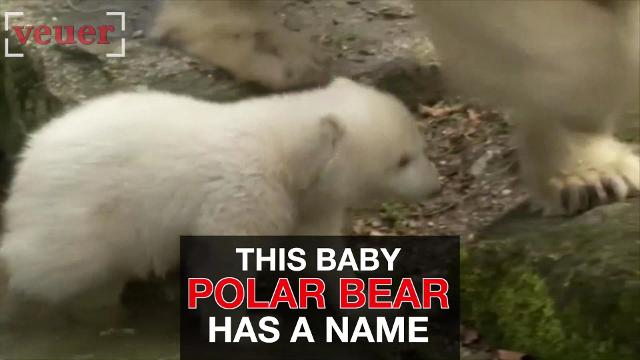 Munich Zoo names its baby polar bear. Quintana has been capturing hearts since his birth 4 months ago.