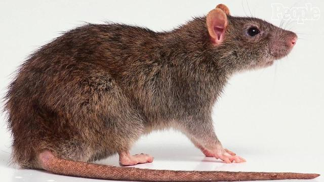 Petco Rats Petco cleared in boy's...