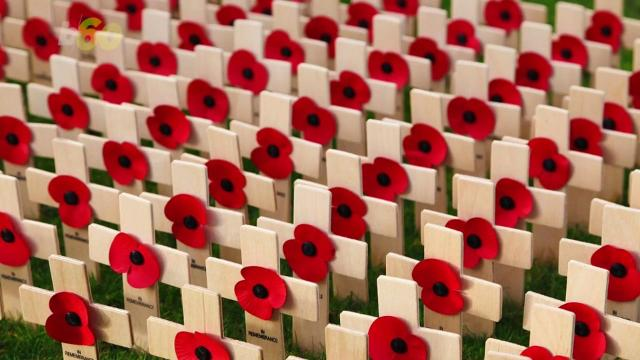 This Is Why Poppies Are An International Symbol Of Remembrance