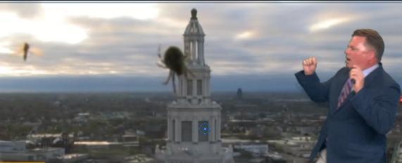 Spider devours dinner during weather forecast