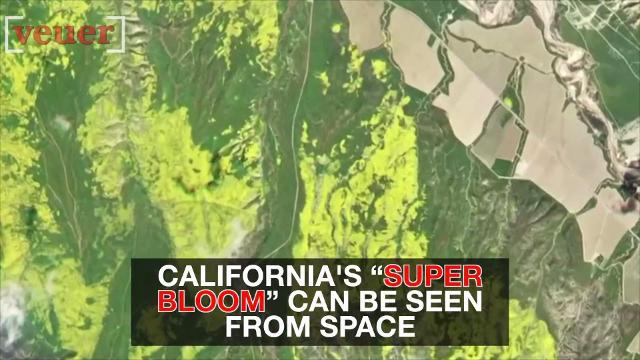 California's wildflower 'super bloom' is visible from space.