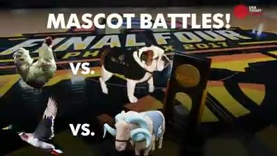 Which of the Final Four mascots would win in a fight? Players at North Carolina, Oregon, South Carolina and Gonzaga have a lot of different opinions.