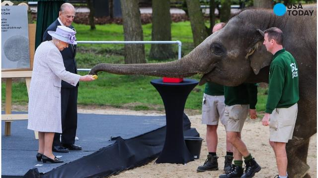 When Queen Elizabeth II and Prince Philip Duke of Edinburgh fed bananas to an elephant at Whipsnade Zoo, the peckish pachyderm came back for more.