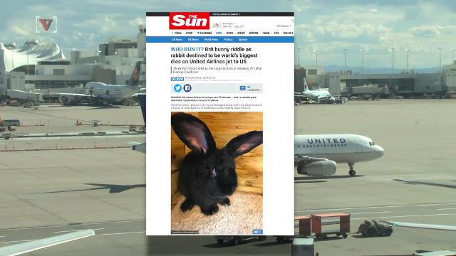United Airlines says giant bunny was alive when plane arrived