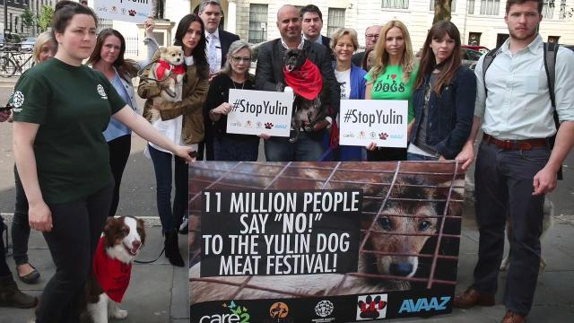 After an online petition garnered more than 11 million signatures worldwide,  the chinese city of Yulin has banned the sale of dog meat right before the start of the Yulin Dog Meat Festival.
