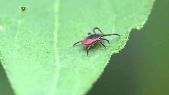 CDC: If you spot a tick, grab the tweezers