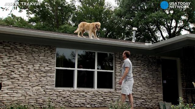 Roof Jumping Dog Makes Heads Turn