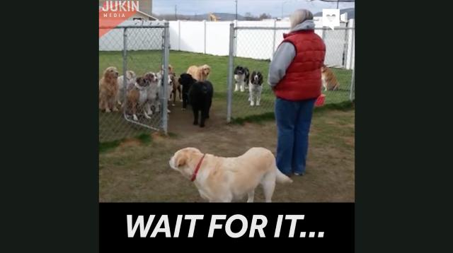 Class clown shows up at doggy obedience class