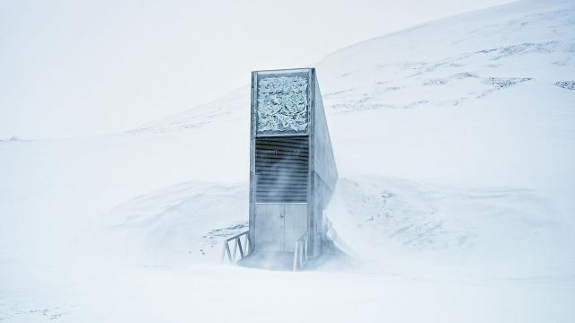 Melting Arctic ice jeopardizes humanity's plant backup plan