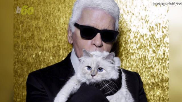Karl Lagerfeld's famous cat, Choupette, has a popular Instagram account, and now has a fancy stuffed animal version for only $545. Keri Lumm (@thekerilumm) has more.