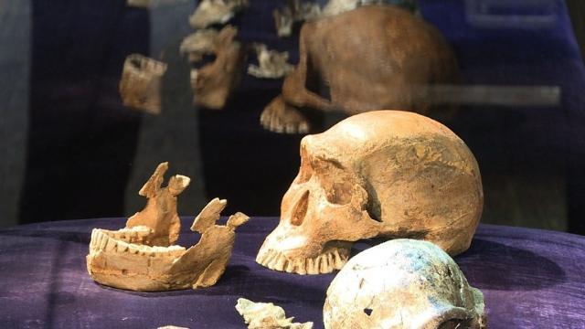 Homo naledi  Back in the day 550887193