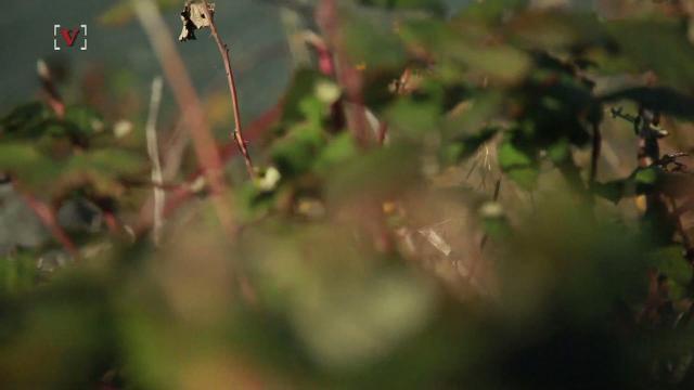 According to a new study, plants can actually hear. Veuer's Nick Cardona (@nickcardona93) has that story.