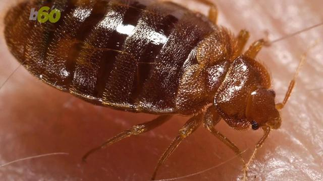Our biggest fears can have our minds racing with scary images of bed bugs, but could you spot one? Angeli Kakade (@angelikakade) has the story.