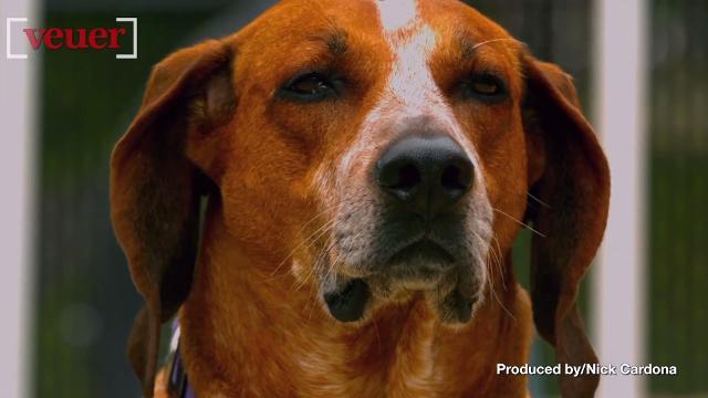 Perro brote de la gripe se propaga a una Kentucky Sociedad protectora de animales de ubicación - The Courier-Journal 3