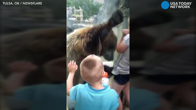 Grizzly bear wows kids with antics