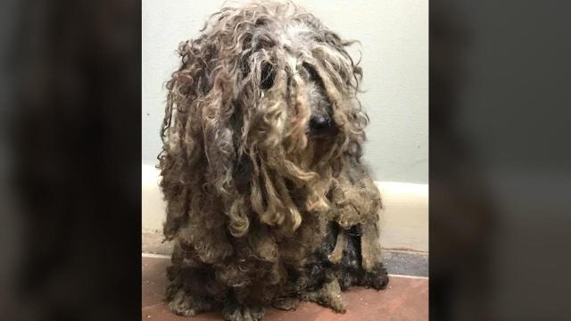 Rescued dog, dubbed Bob Marley, 'is scared to death of people'