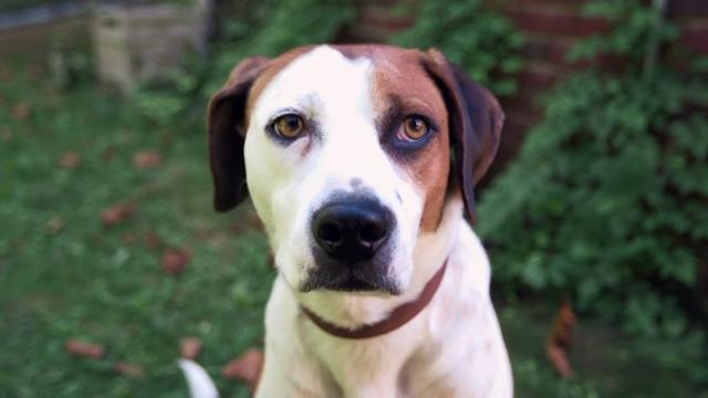 Allison Tolman's canine co-star love