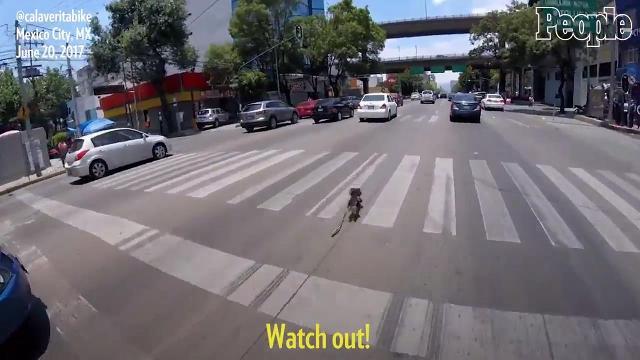 Hero biker saves tiny runaway dog from crazy Mexico City traffic