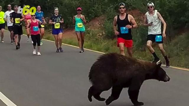 A bear makes a surprise appearance during Colorado race