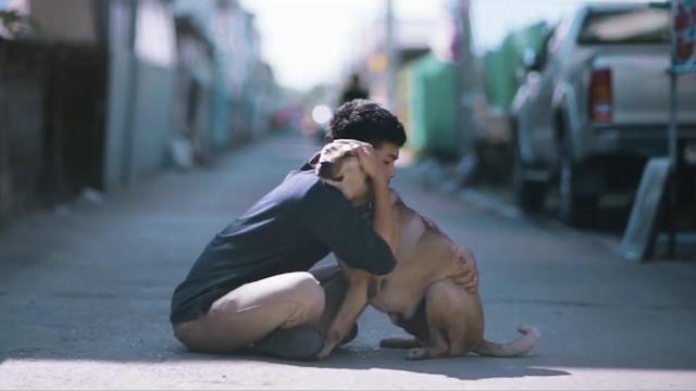Unwanted dogs finally get the love they crave