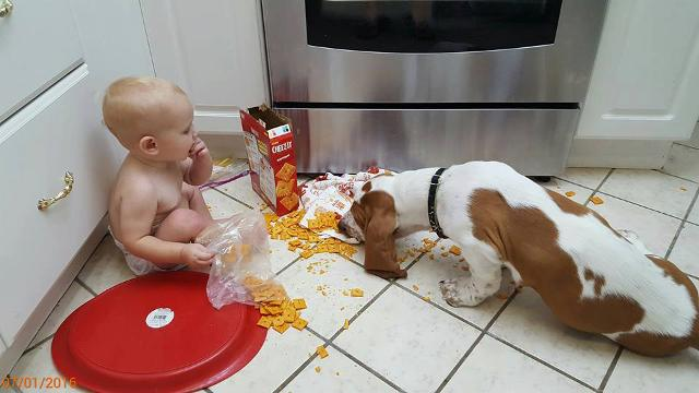 Toddler and dog team up for all sorts of trouble