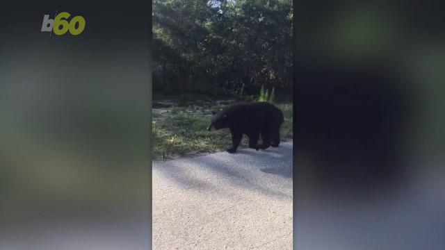 Police officer gets way too close to curious bear